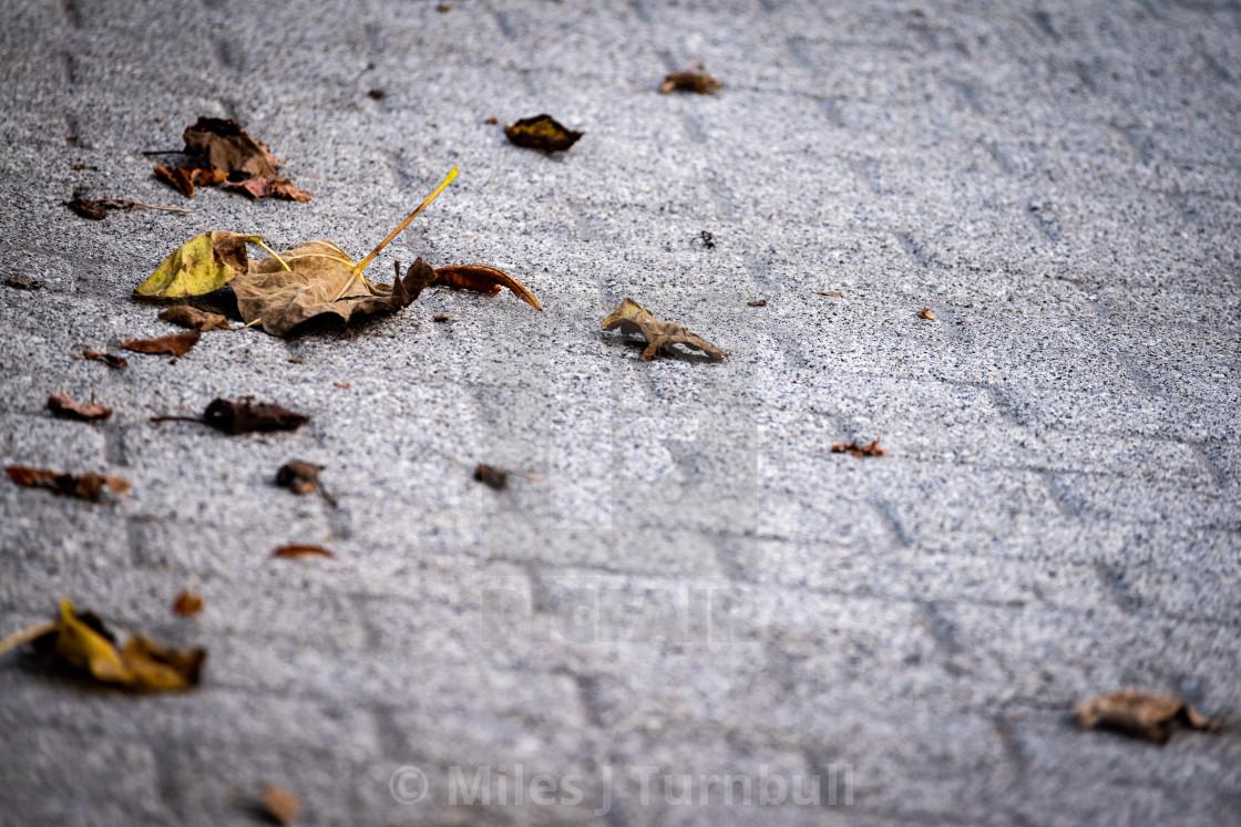 """Autumn Leaves on grey block paving"" stock image"