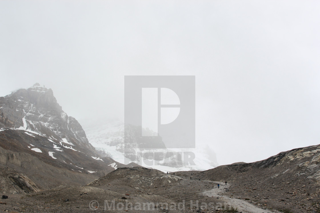 """""""Bloomy Athabasca Icefield"""" stock image"""