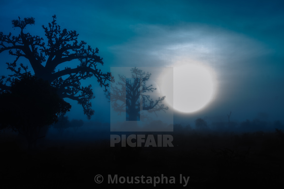 """Baobab sunrise"" stock image"