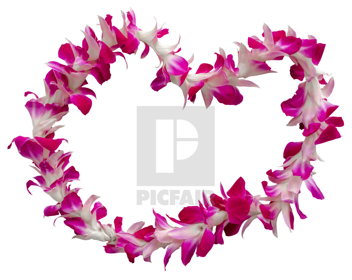 """""""Hawaii Lei On A White Background"""" stock image"""
