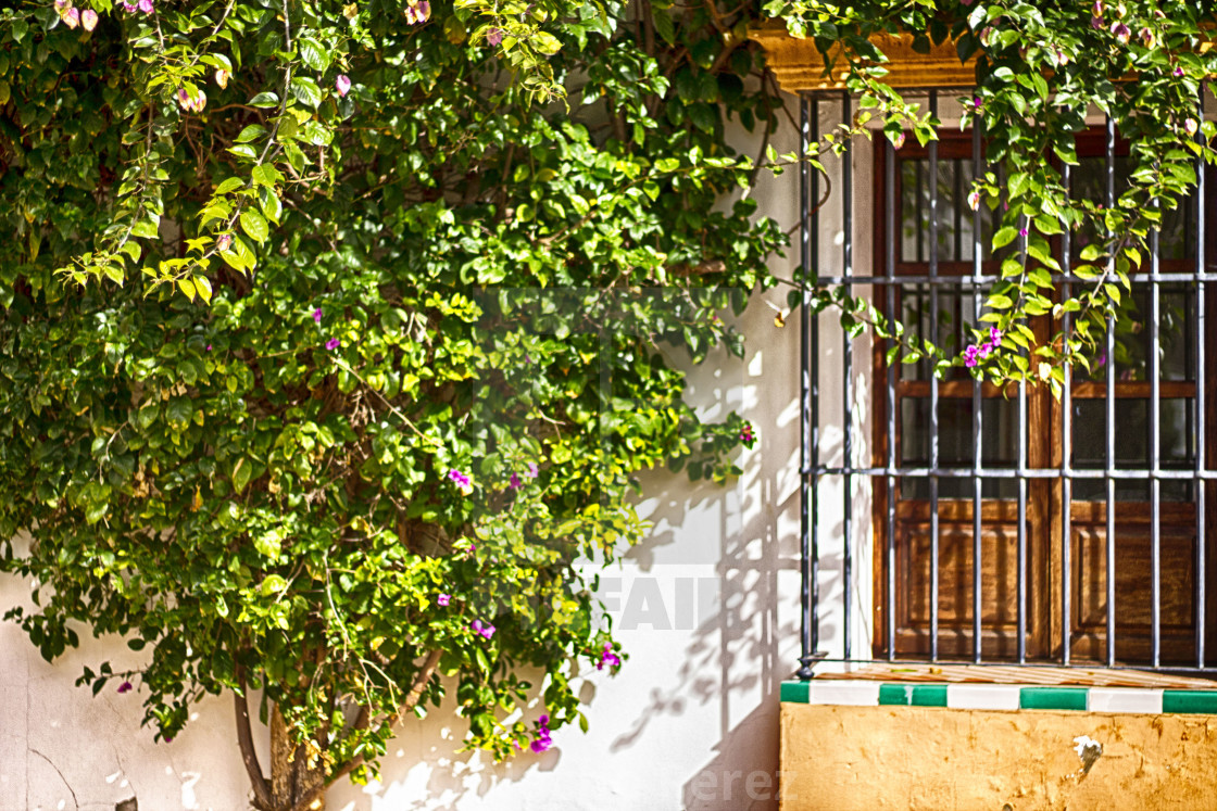 Patio Andaluz License Download Or Print For 9 92 Photos Picfair