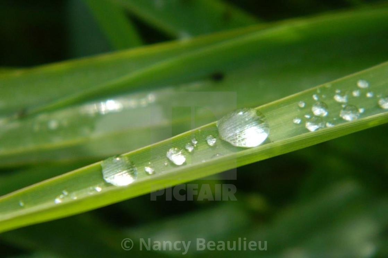 """Still rain"" stock image"