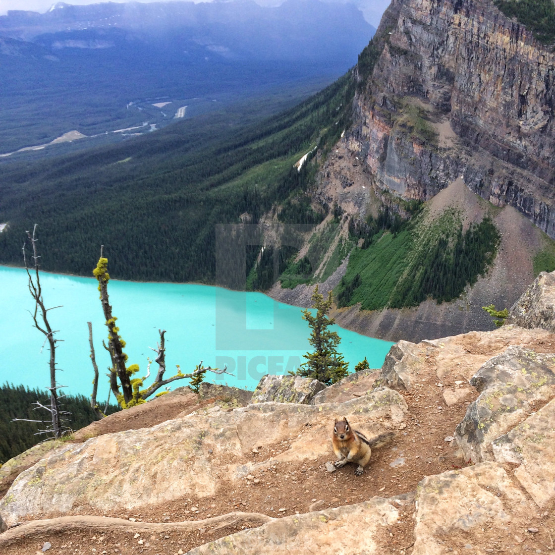 """""""Chipmunk on the mountain"""" stock image"""