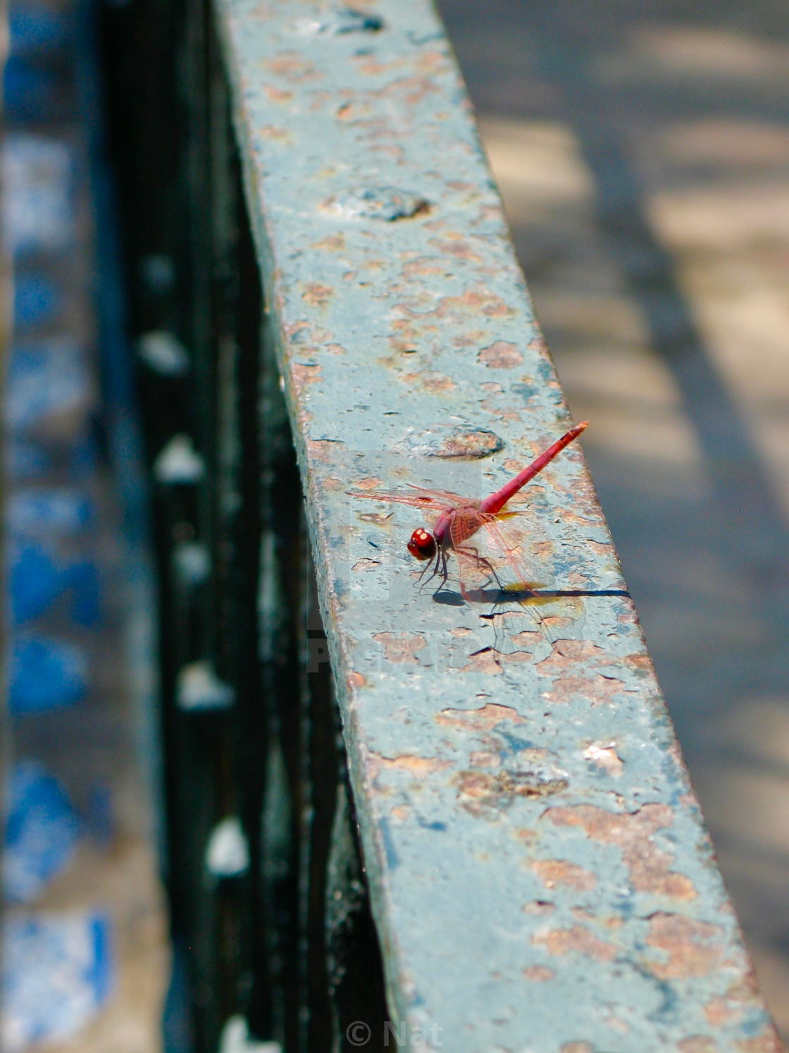 """""""Dragonfly on rusty railing"""" stock image"""