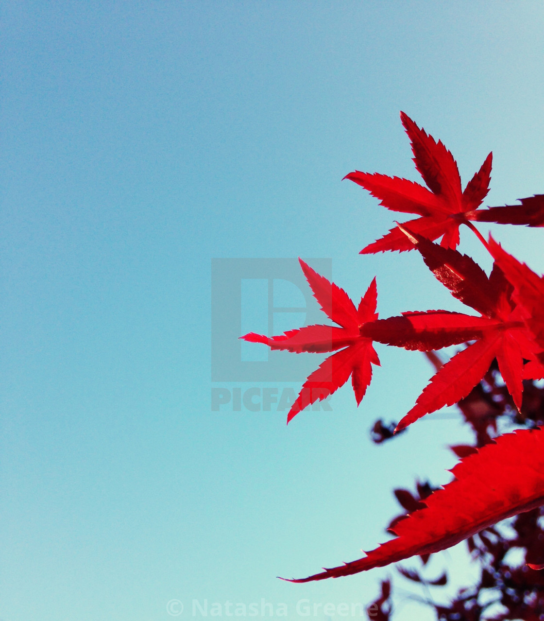 """Autumnal colours"" stock image"
