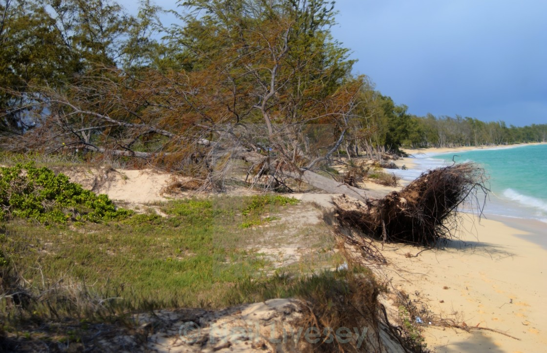 """Windswept Beach"" stock image"