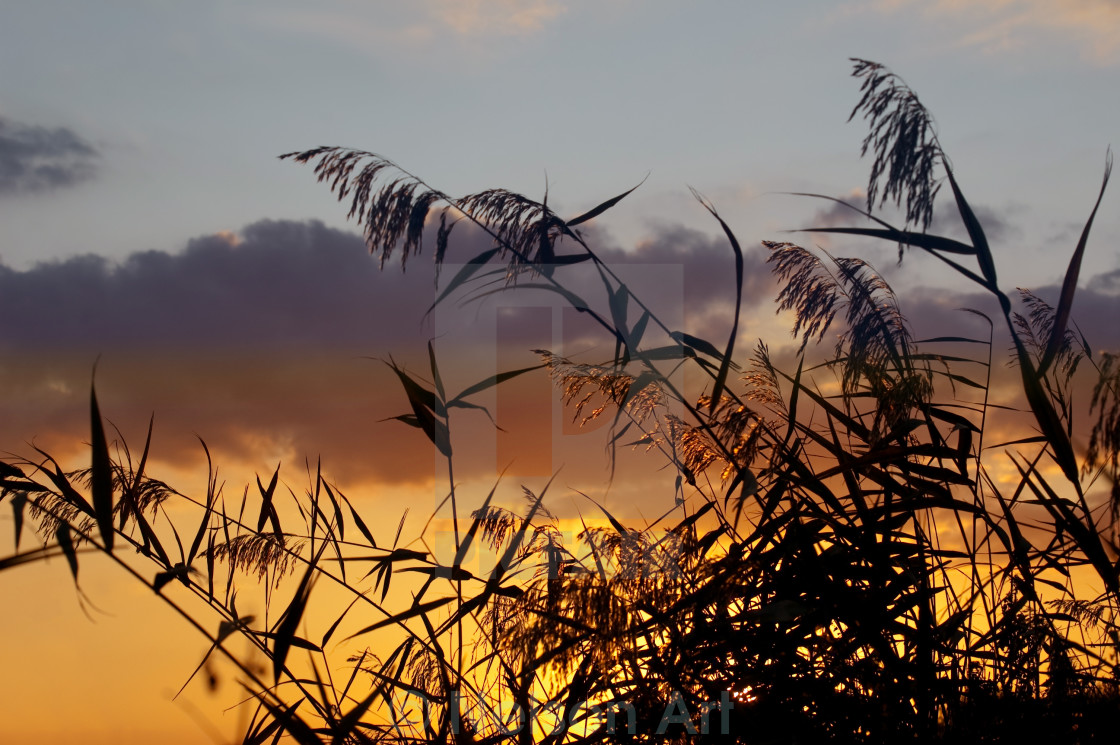 """sunset and grass"" stock image"