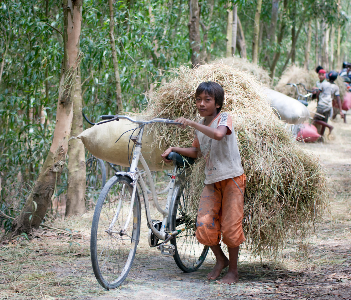 """Child labor at Asia countryside"" stock image"