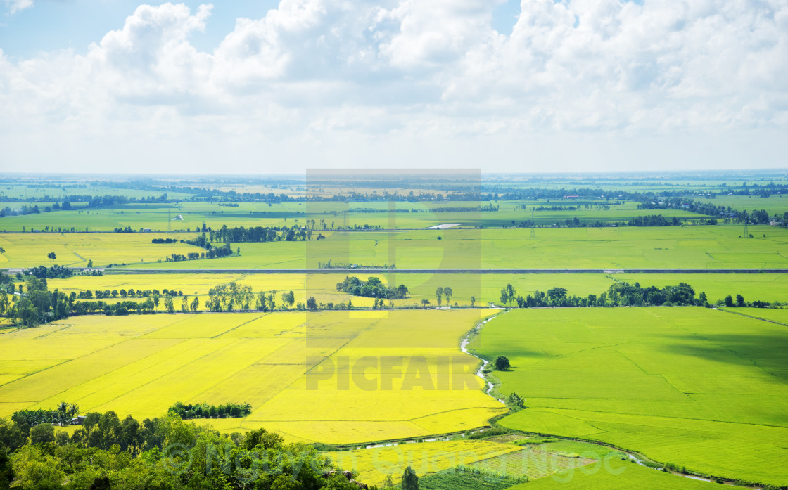 """""""Rice field at An Giang province"""" stock image"""