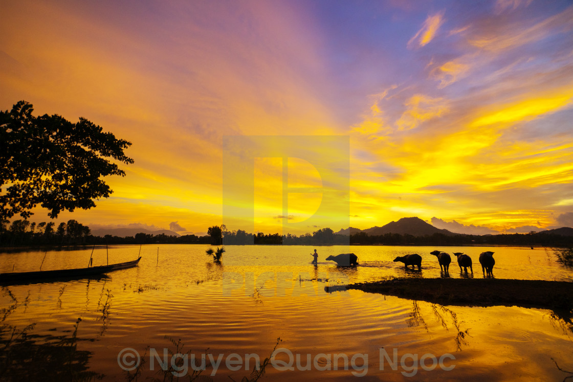 """Sunset at the field in flooding season"" stock image"