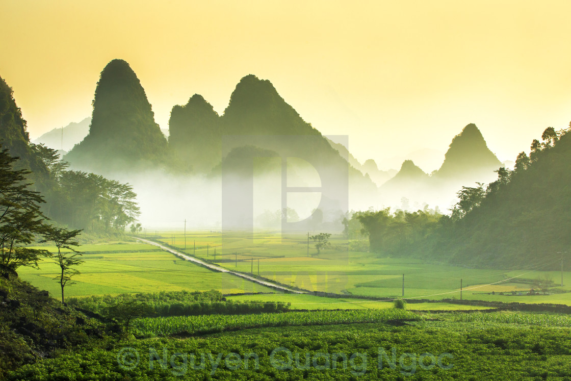"""Green field at sunrise"" stock image"