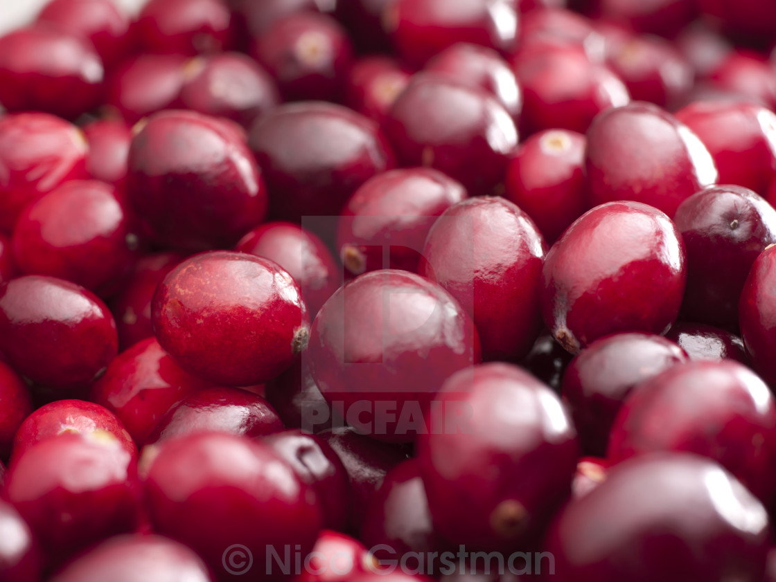"""CRANBERRY"" stock image"