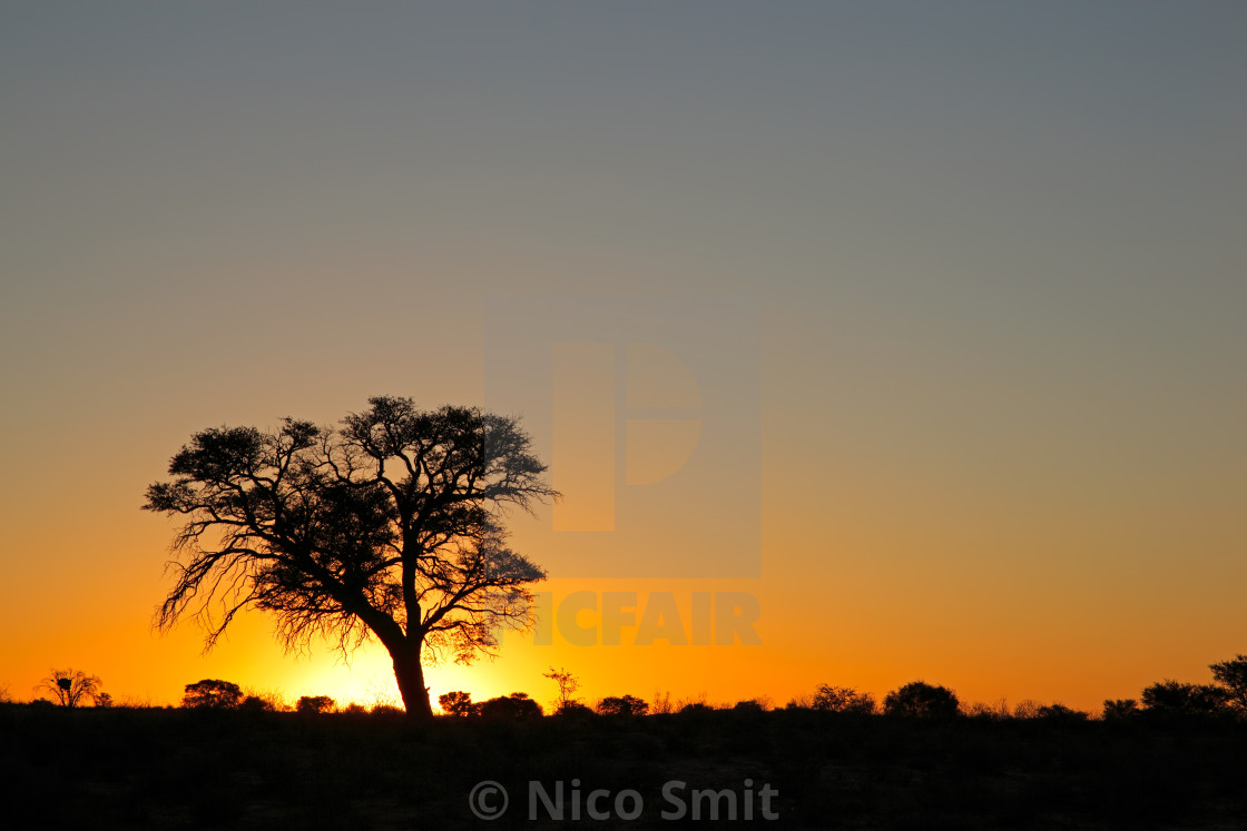 """""""Sunset with silhouetted tree"""" stock image"""