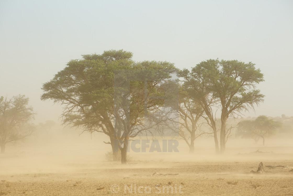 """""""Sand storm - Kalahari desert"""" stock image"""