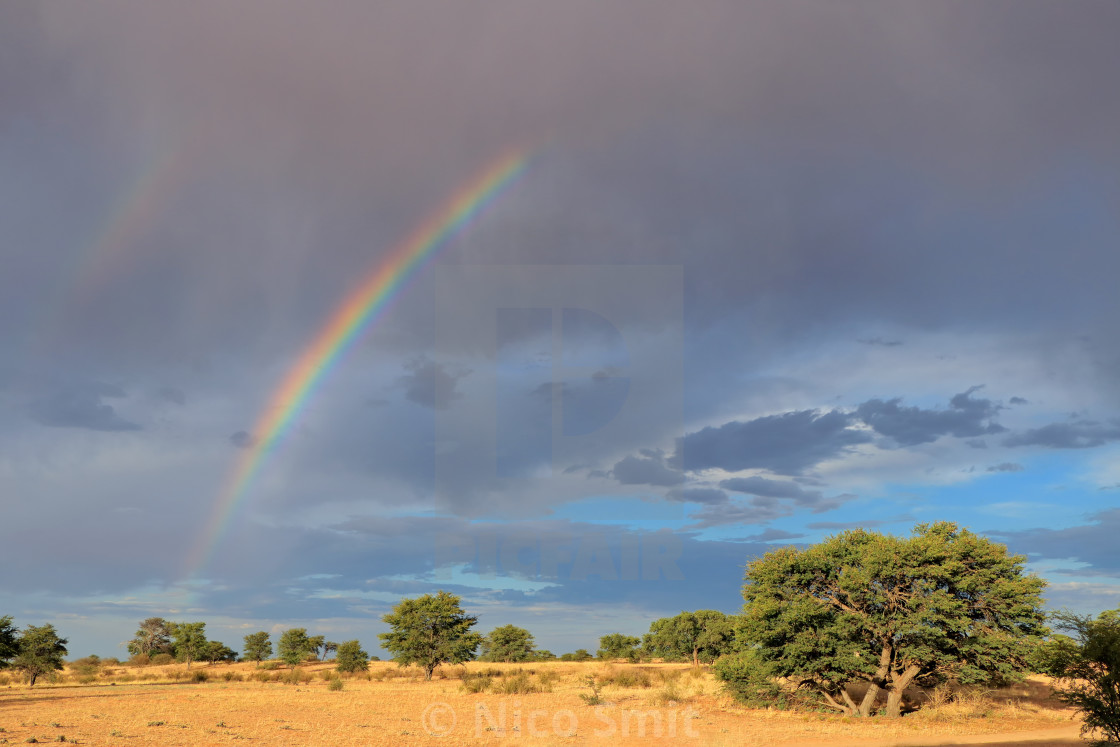 """Scenic landscape - Kalahari desert"" stock image"