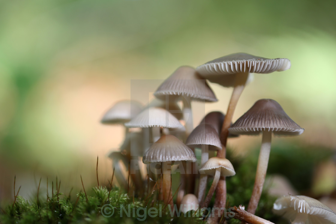 """Fairyland"" stock image"