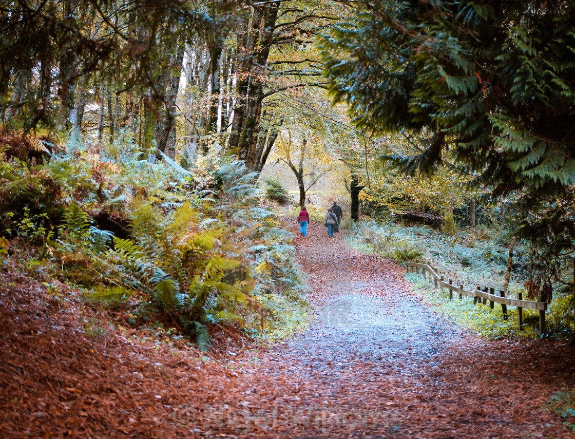 """Autumn Walk"" stock image"