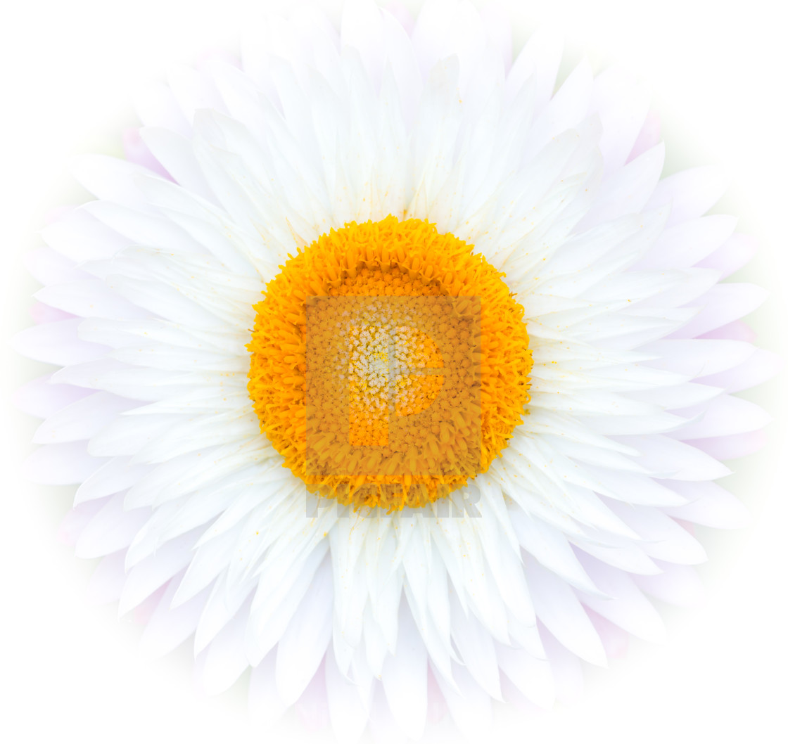 """Yellow on White"" stock image"