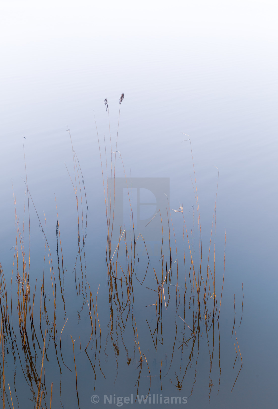 """Still Life in the Mist"" stock image"