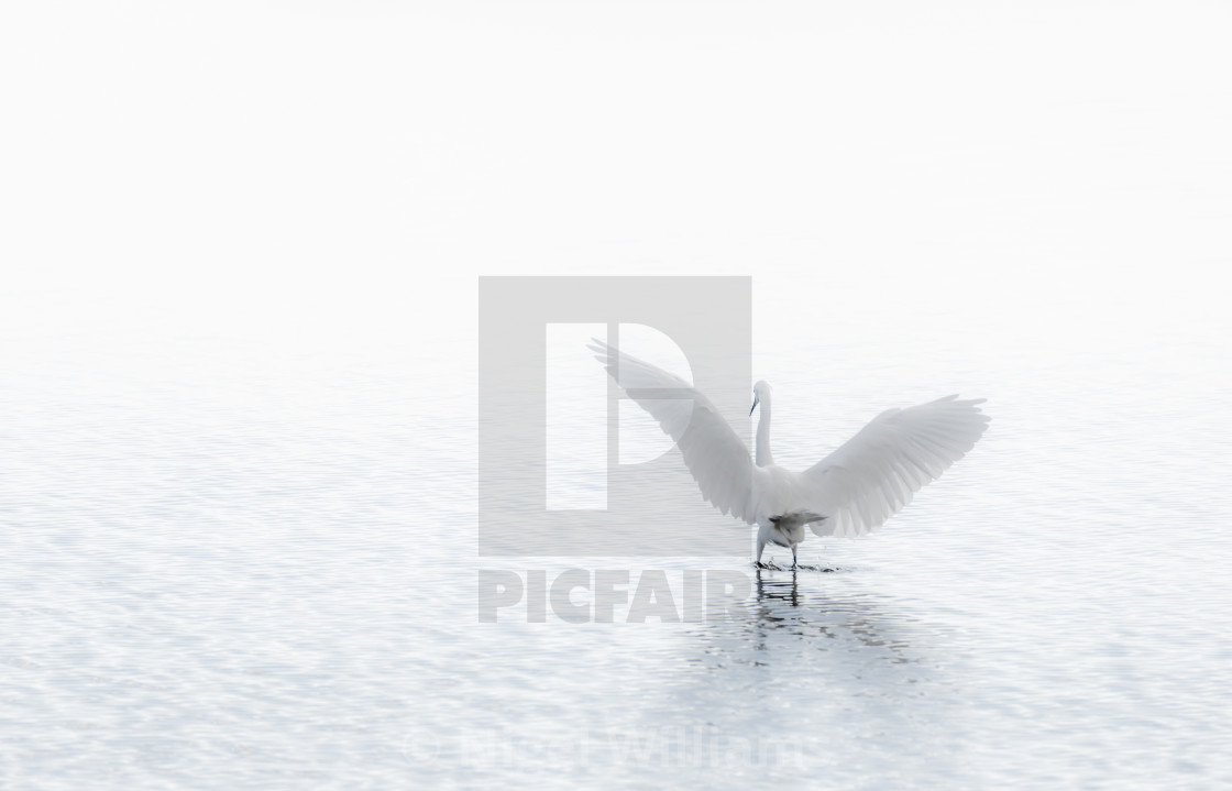 """Ethereal Angel Wings"" stock image"