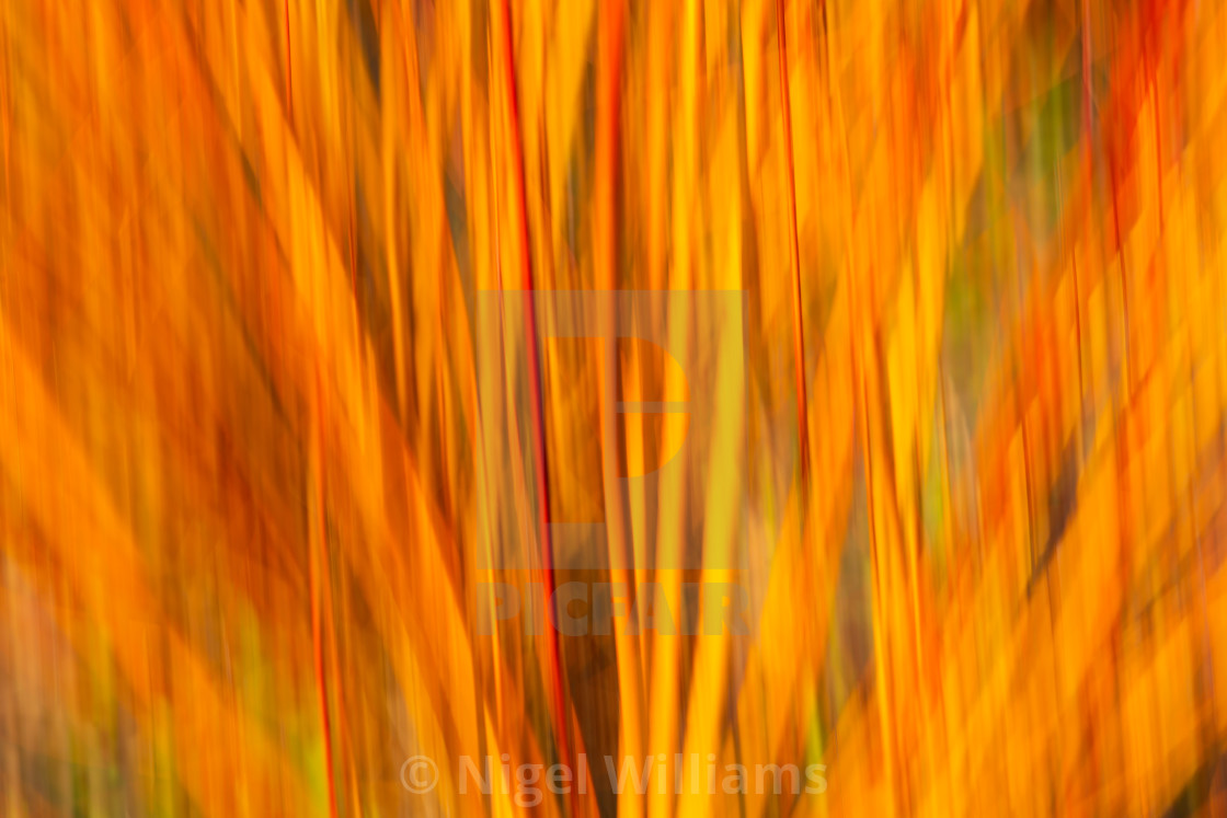 """Flameburst"" stock image"