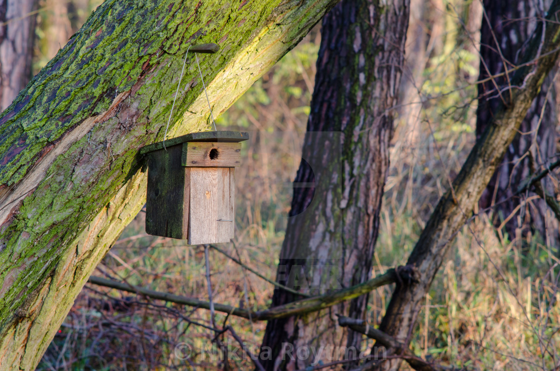 """""""Home for birds"""" stock image"""