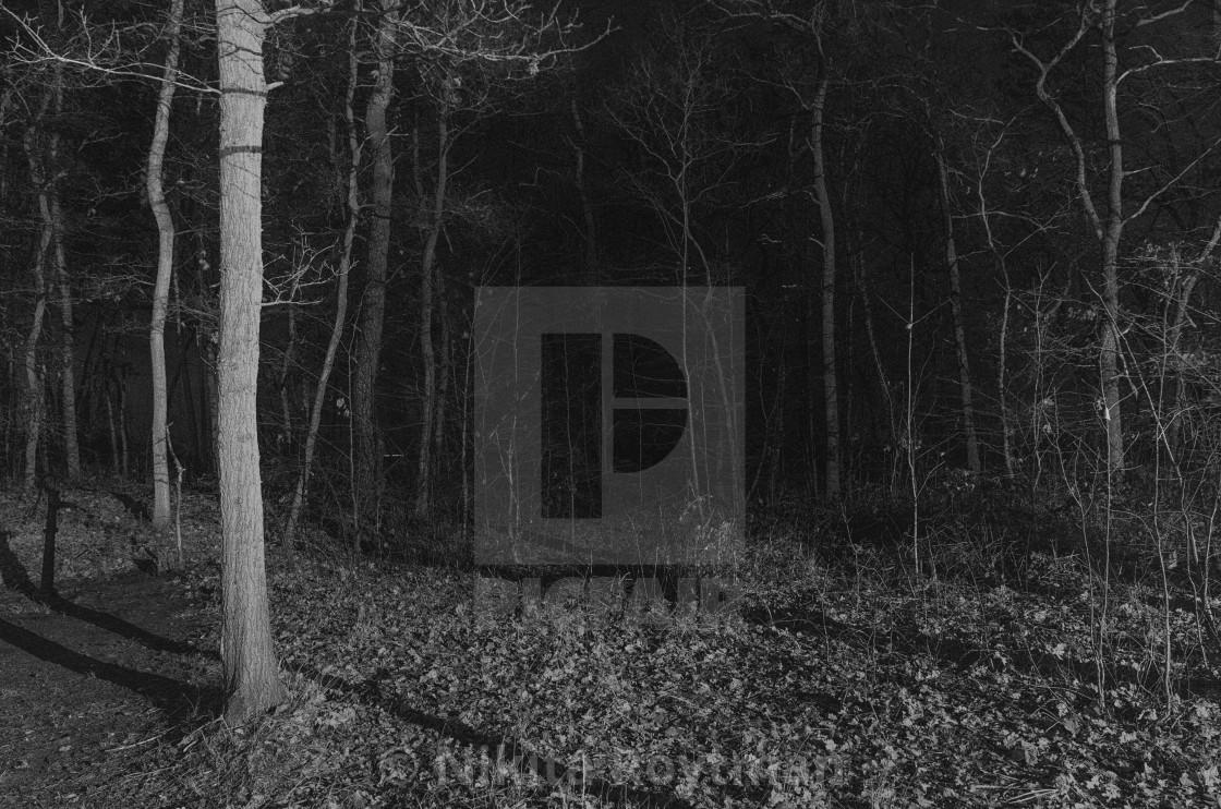 """Forest In Film Noir"" stock image"