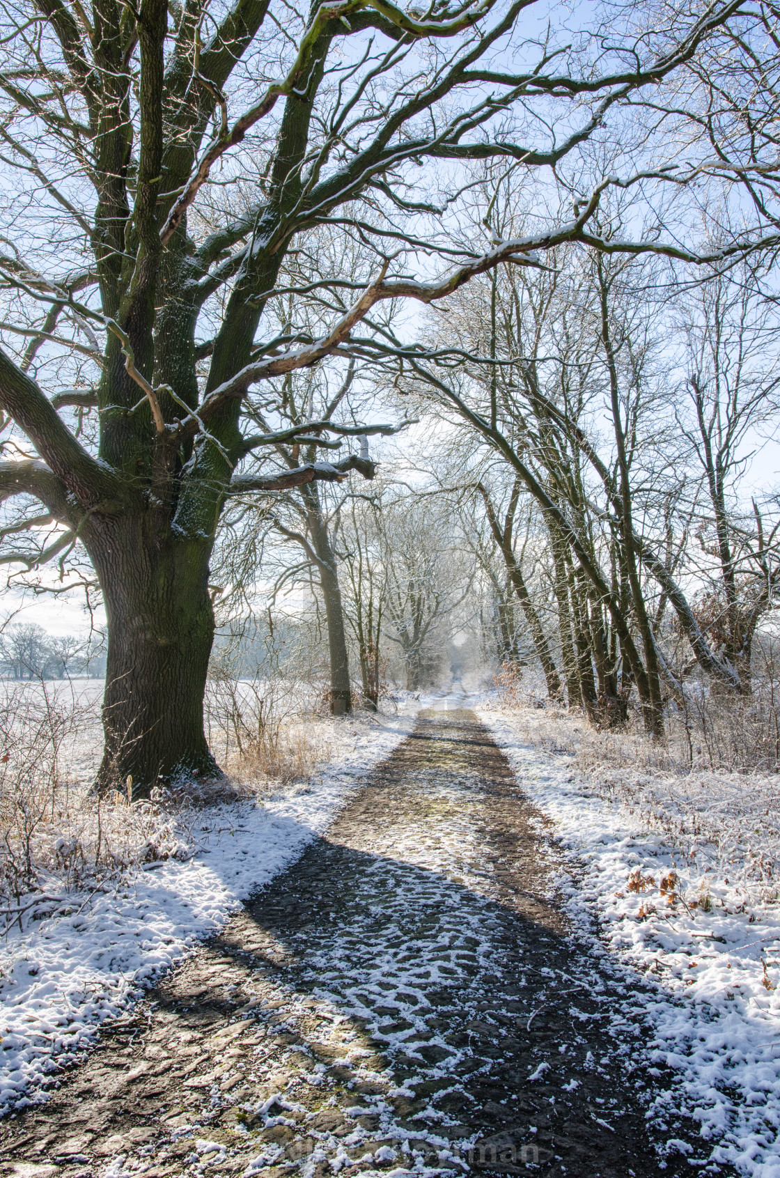 """""""The Path Of Winter"""" stock image"""