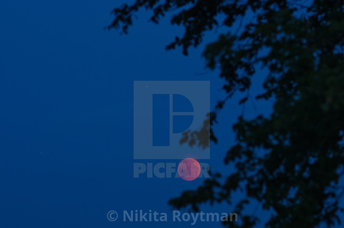 """Tree branches reaching for the eclipsed moon"" stock image"