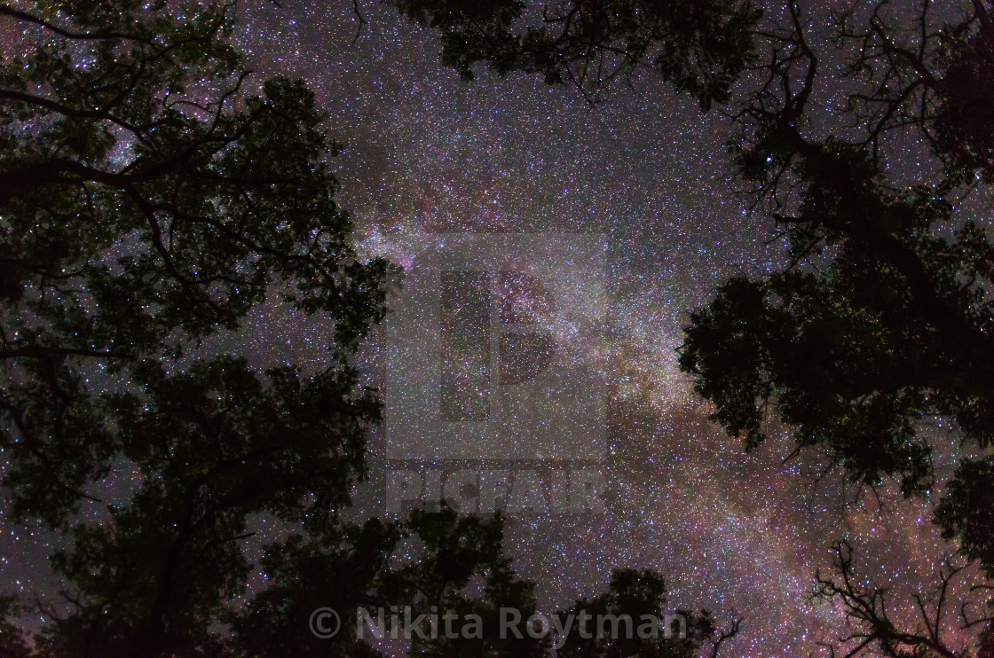 """Milky Way galaxy framed by trees"" stock image"