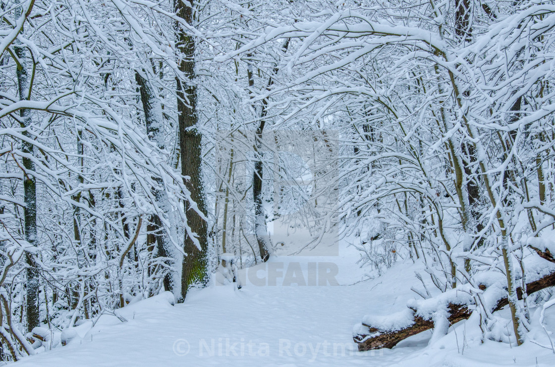 """Path Through The Snowy Forest"" stock image"