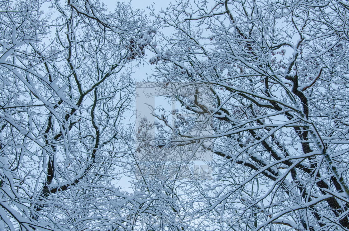 """""""Trees In Winter"""" stock image"""