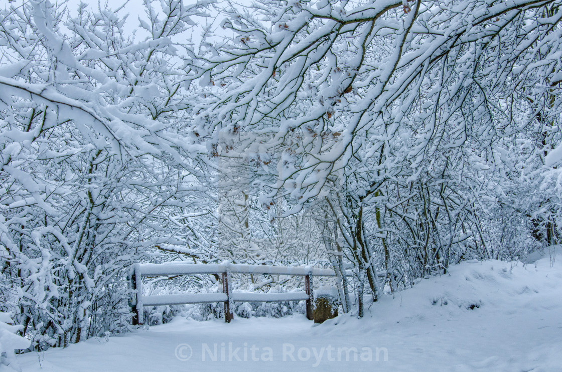 """Winter In Harz"" stock image"