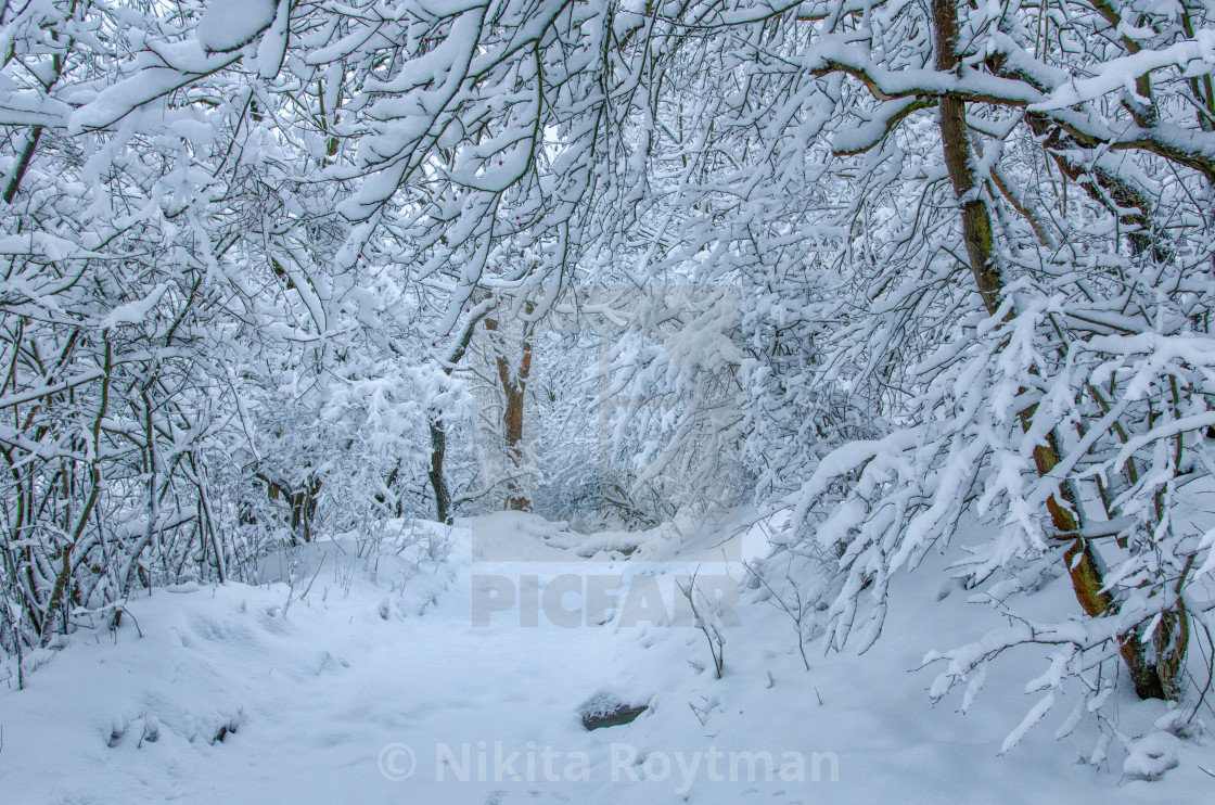 """""""Natural Pathway In The Snow"""" stock image"""