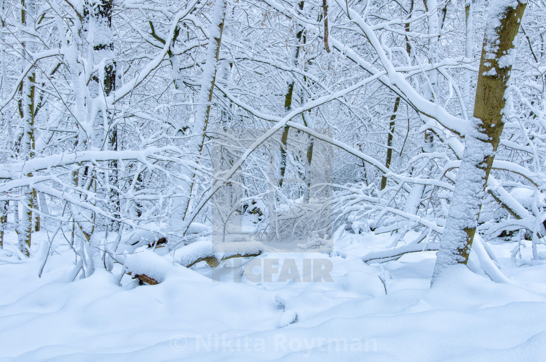"""Beauty Of The Fresh Snow"" stock image"