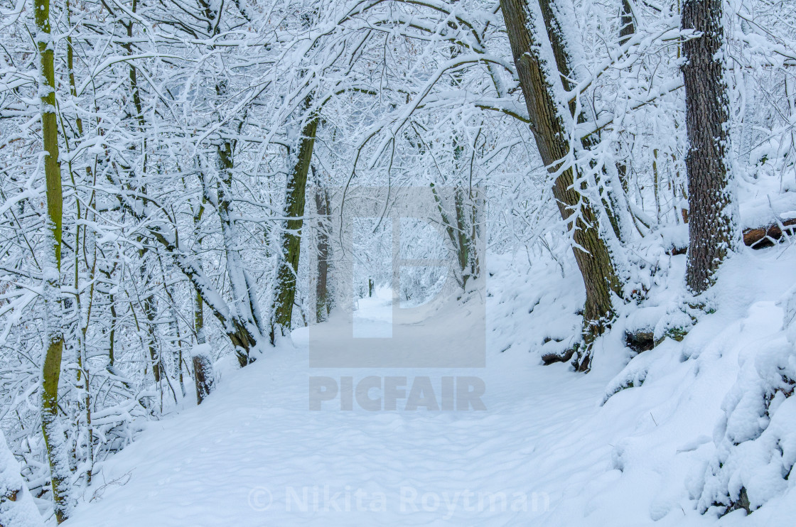 """Winter Alley In The Forest"" stock image"