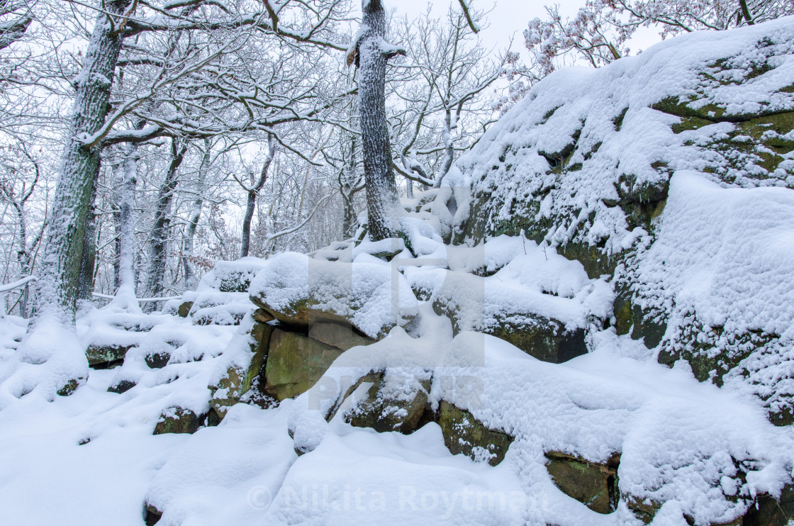 """""""Snow Covered Rocky Forest"""" stock image"""