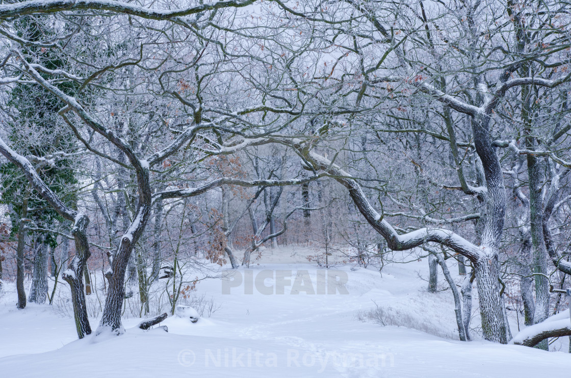 """Arch In The Winter Forest"" stock image"