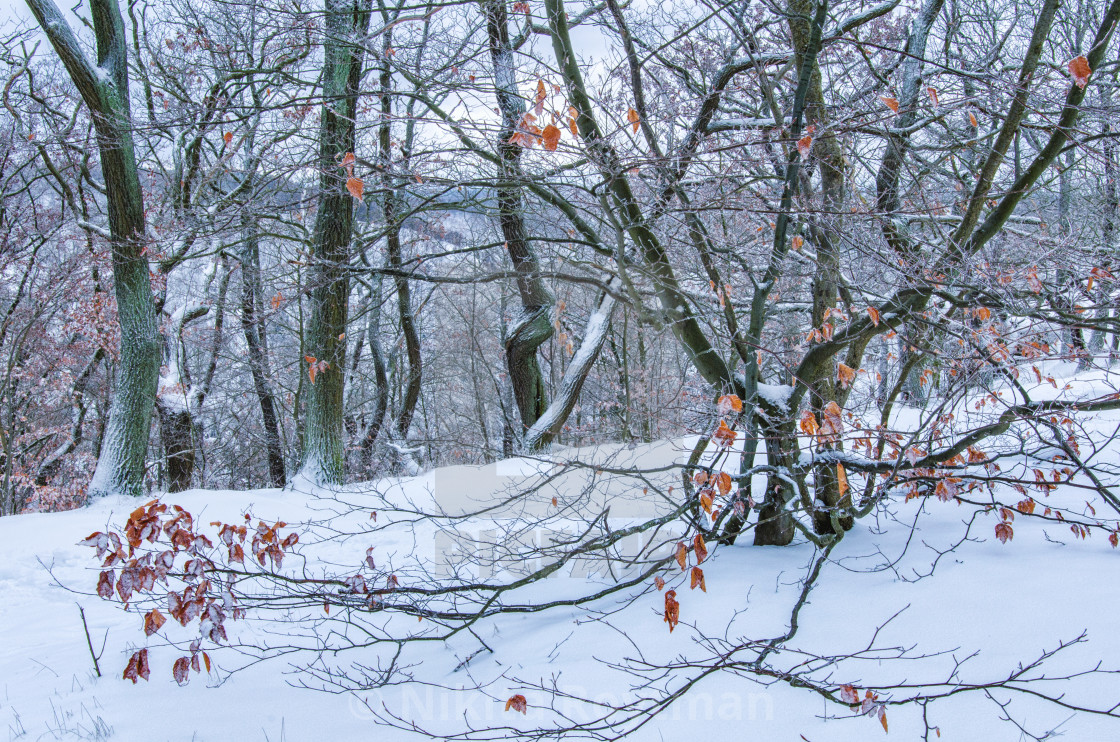 """The Feeling Of Fresh Snow In The Forest"" stock image"