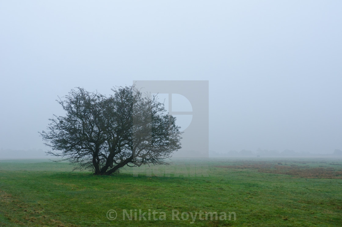 """Alone in the haze"" stock image"