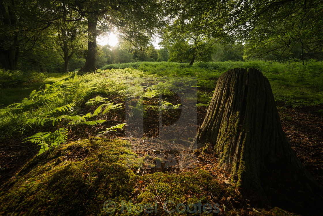 """The New Forest - Stumped"" stock image"