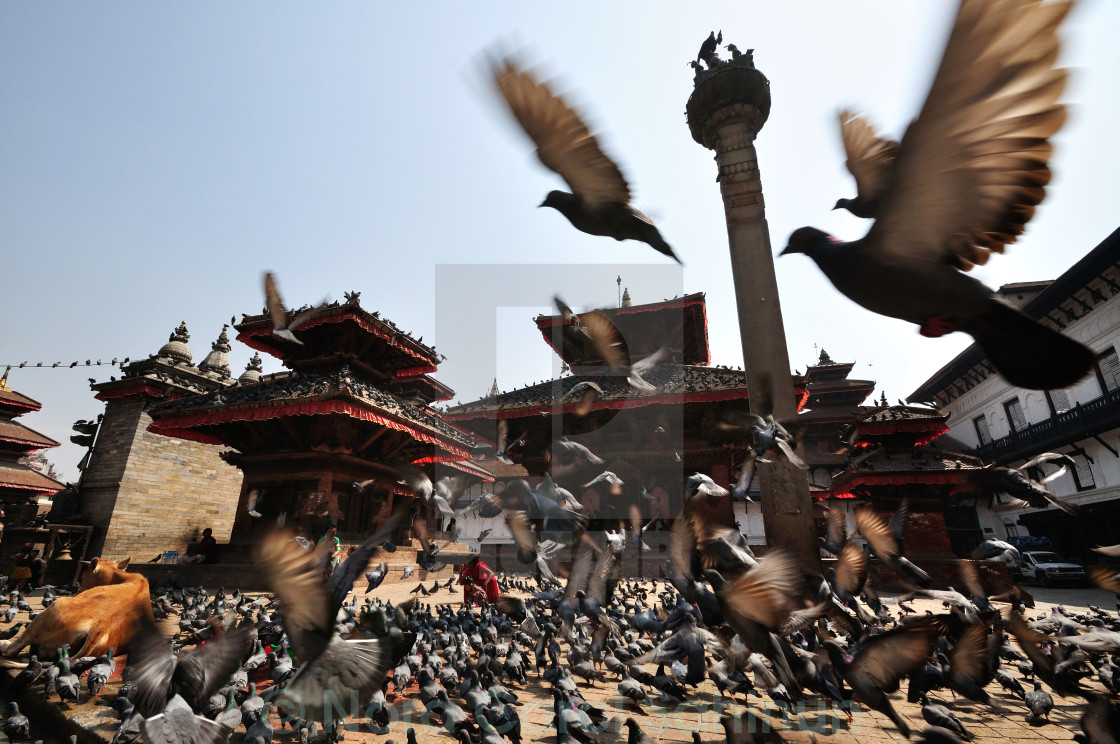 """Flying pigeons in Durbar Square, Katmandu"" stock image"