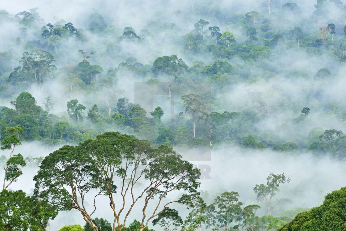 """Fogs and mist over dipterocarp rain forest in Danum Valley Conservation Area in Lahad Datu, Sabah Borneo, Malaysia."" stock image"