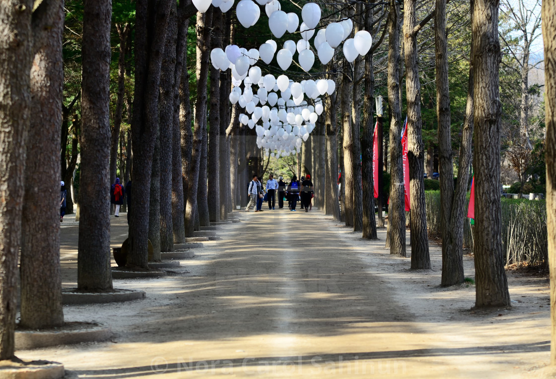 """GANGWON-DO, SOUTH KOREA - APRIL 6, 2017: Tourists walking down the path between rows of trees and white balloons in Nami Island. Namisum is a tiny island in Chuncheon, Gangwon- Do, South Korea,"" stock image"