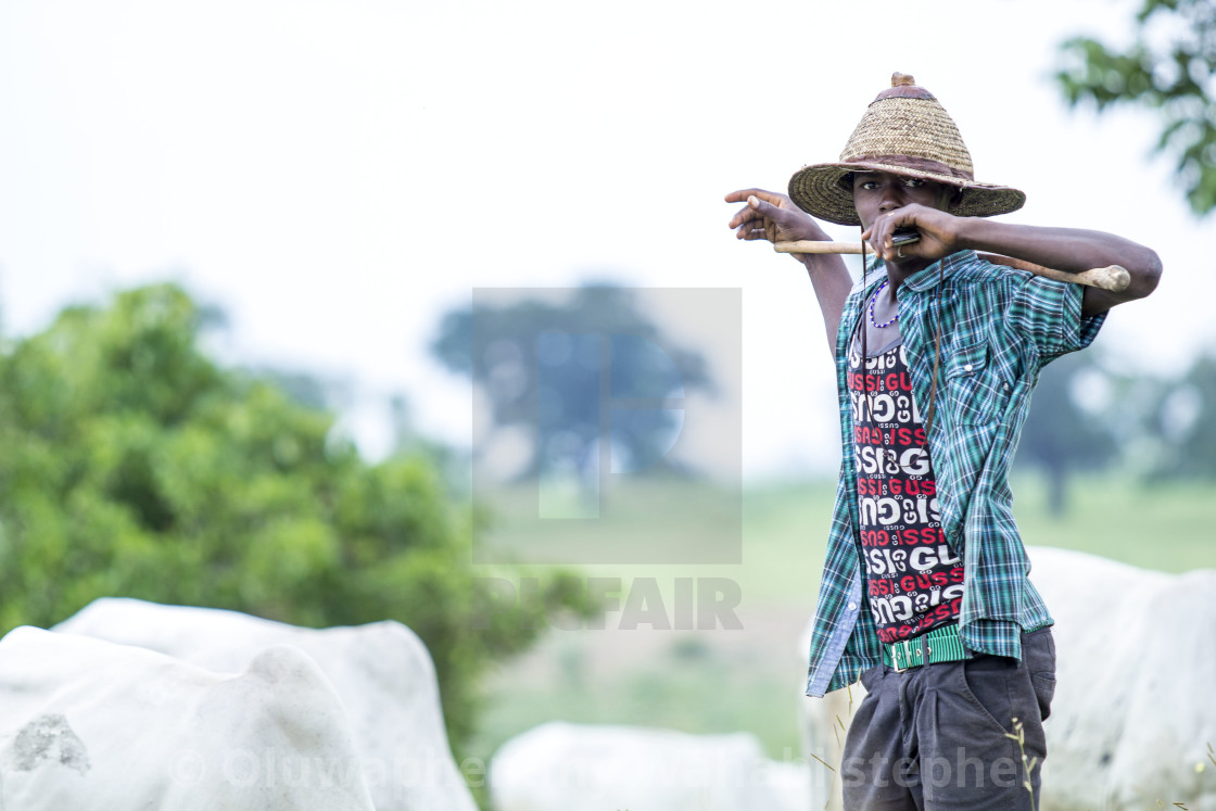 """Portrait of a Fulani Boy #cows"" stock image"