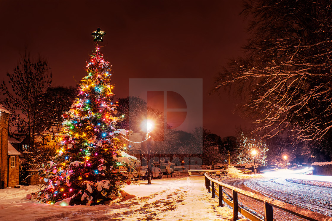 """""""Christmas Tree in the Snow"""" stock image"""
