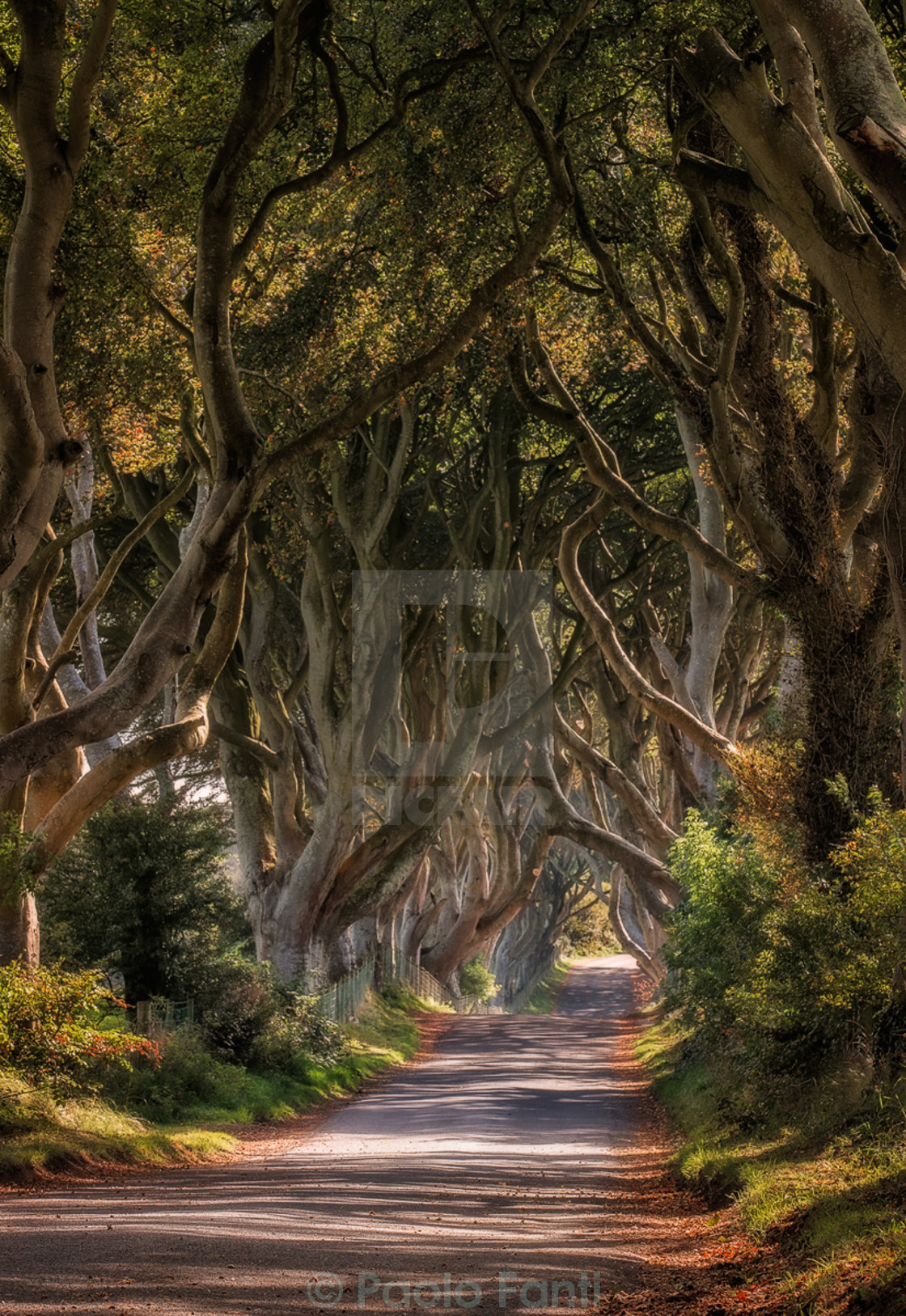 """Dark hedges"" stock image"