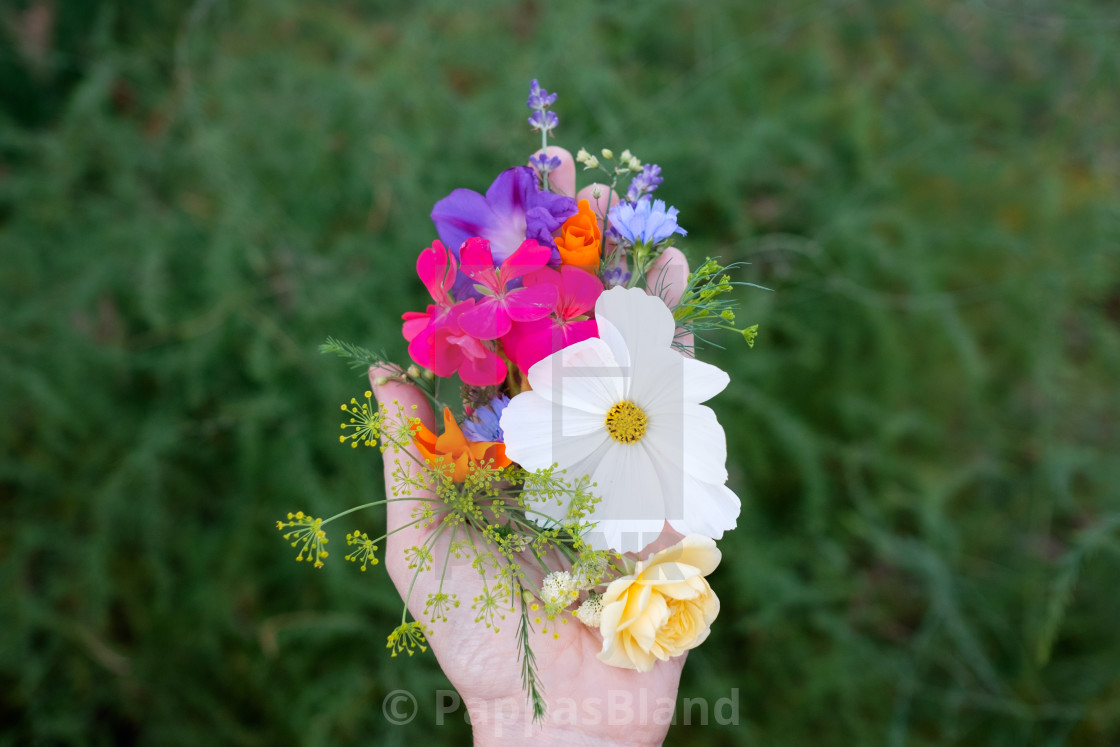 """""""A handful of summer flowers in New Jersey, USA."""" stock image"""