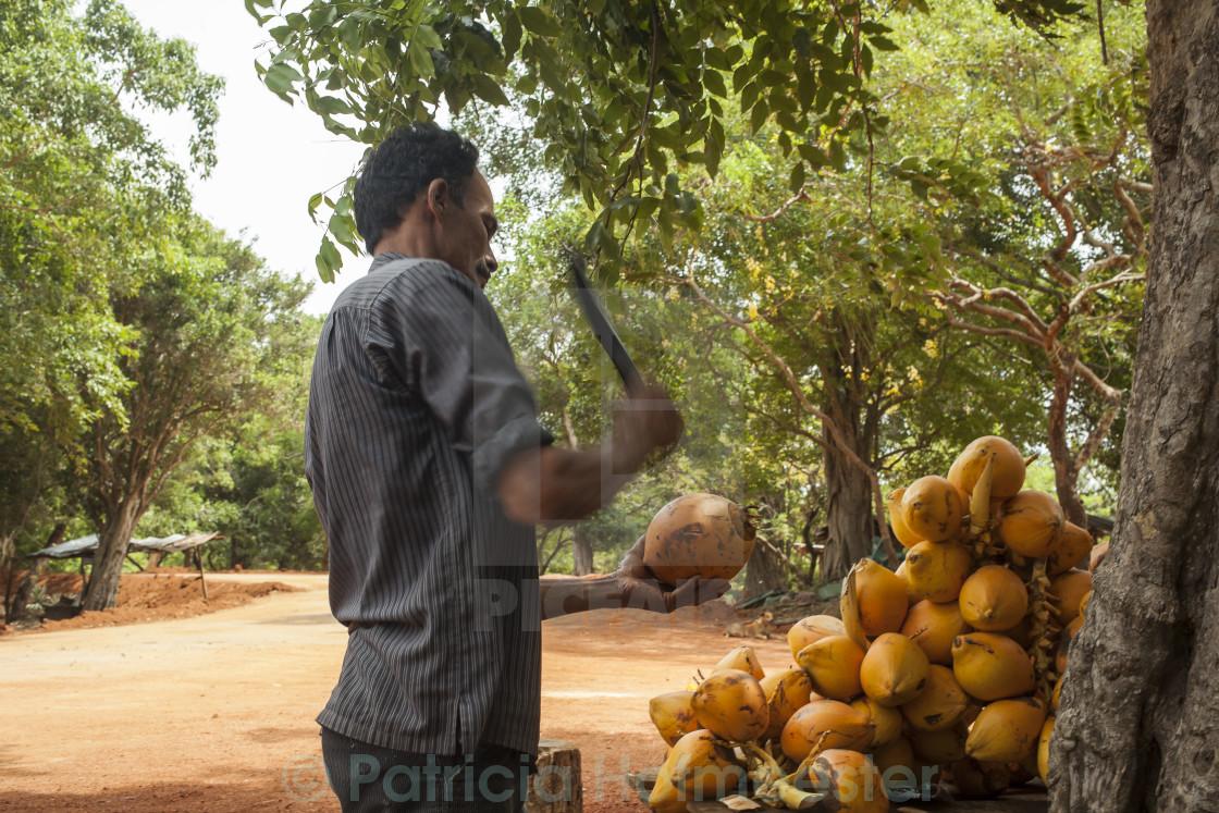 """Man chopping coconut"" stock image"