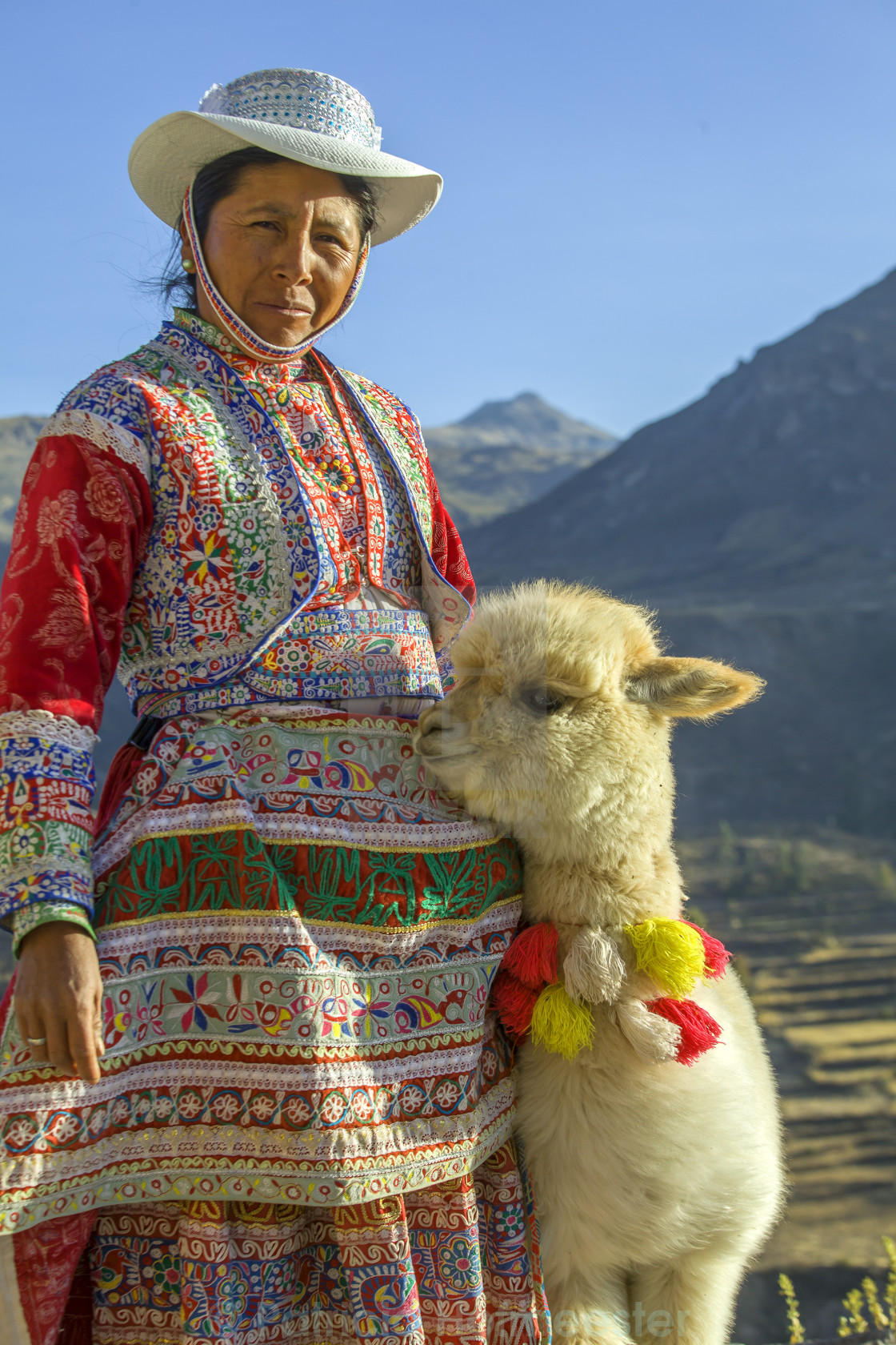 """Peruvian woman with baby Alpaca"" stock image"